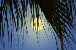 Härlig fullmåne i palmbladgardinen på natten royaltyfri bild