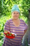 Härlig gammal kvinna och jordgubbeskörd Royaltyfria Foton