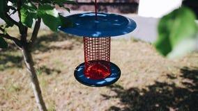 Härlig garnering i form av en bur eller en lykta som hänger på ett träd i trädgården stock video
