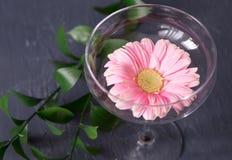 Härlig gerberablomma i exponeringsglas på bakgrund en marmoryttersida Dekorativ beståndsdel i inre Arkivfoto