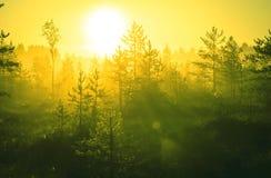 härlig gjord naturvektor för bakgrund Arkivbild