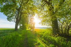 Härlig gränd av träd på den gamla glömda sandiga vägen Fotografering för Bildbyråer
