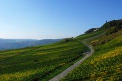 Härlig gränd bland vingården på kullen Arkivbild