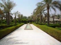 Härlig gränd med palmträd som står i rader, lång vattenlinje med den lilla stenspringbrunnen Arkivfoton