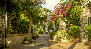 Härlig gränd mycket av träd och blommor på den Capri ön, Italien royaltyfria foton