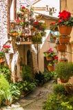 Härlig grändgarnering med växter och blommor royaltyfri fotografi