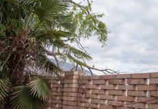 Härlig gräsplan gömma i handflatan filialer tätt upp Royaltyfri Bild