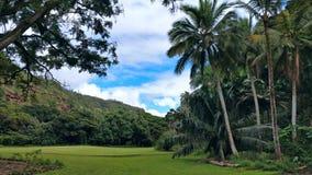 Härlig gräsplanträdgård, Oahu, Hawaii Arkivfoto