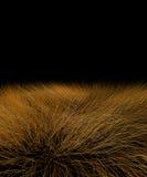 härlig grässavannah vektor illustrationer