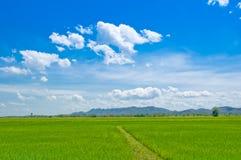 härlig grässky thailand Royaltyfria Foton