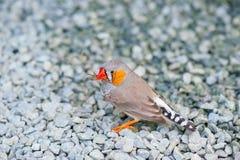 Härlig grå fågel royaltyfri foto