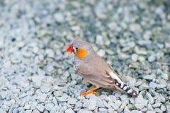 Härlig grå fågel royaltyfria foton