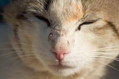 Härlig grå hemlös katt i gatan royaltyfri foto