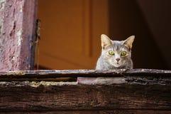 Härlig grå katt på det gamla fönstret som ner ser fotografering för bildbyråer