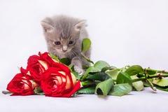 Härlig grå kattunge nära en blommabukett En kattunge ser t Arkivfoton