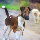 Härlig grå tillfällig hund i staden på bakgrunden av en knähund royaltyfria bilder