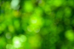 Härlig grön bokeh. Ljus naturlig bakgrund. Fotografering för Bildbyråer