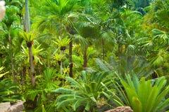 Härlig grön landskapdesign Royaltyfri Foto