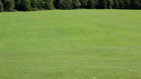 härlig grön lawn stock video