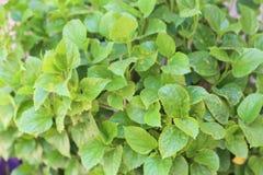 härlig grön leaf royaltyfri bild