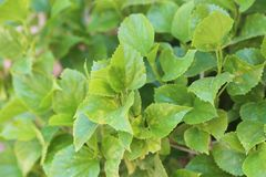 härlig grön leaf fotografering för bildbyråer