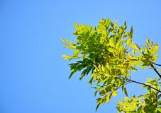 härlig grön leaf Royaltyfria Foton