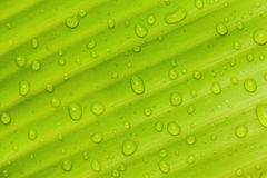 härlig grön leaf Arkivbild