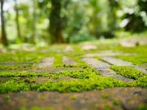 Härlig grön mossa på golvet för röd tegelsten, mossacloseup, makro fotografering för bildbyråer