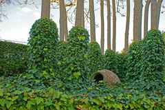 Härlig grön murgröna som är lövrik bland träd med gyttjakruset Royaltyfri Foto