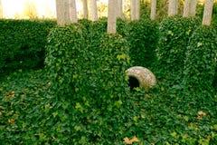 Härlig grön murgröna som är lövrik bland träd med gyttjakruset bland den 2 Arkivbild