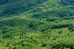 härlig grön natur Royaltyfria Foton