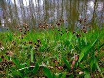 Härlig grön natur och liten flod Arkivbilder