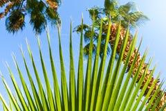 Härlig grön palmträdtjänstledighettextur tätt upp detaljer royaltyfria foton