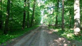 Härlig grön skog i solig dag, Polen stock video