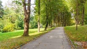Härlig grön skog i sommar Bygdväg, bana, väg, gränd, bana på Sunny Day In Spring Forest Royaltyfri Foto