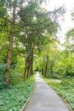 Härlig grön skog i sommar Bygdväg, bana, väg, gränd, bana på Sunny Day In Spring Forest Arkivfoto