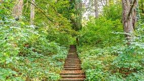 Härlig grön skog i sommar Bygdväg, bana, väg, gränd, bana på Sunny Day In Spring Forest Arkivbilder