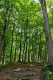 Härlig grön skog i sommar Bygdväg, bana, väg, gränd, bana på Sunny Day In Spring Forest Royaltyfri Fotografi