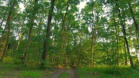 Härlig grön skog i sommar i Polen arkivfilmer
