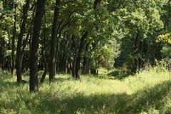 Härlig grön skog i sommar Vandringsled i sommargräsplanskog Fotografering för Bildbyråer