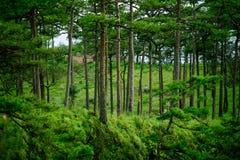 Härlig grön skog med handelsresanden royaltyfria foton