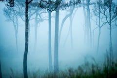 Härlig grön skog med mist Arkivbilder