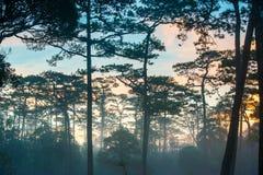 Härlig grön skog med mist fotografering för bildbyråer