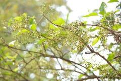 Härlig grön växt Arkivfoton