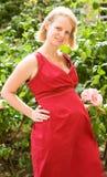 härlig gravid kvinna Royaltyfri Bild