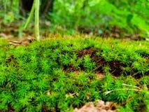 härlig green fotografering för bildbyråer