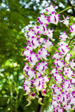 Härlig grupp av orchiden Royaltyfria Foton