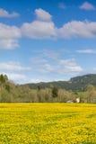 Härlig gul blommaäng och ett ranchhus i avstånd Arkivbild