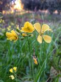Härlig gul blomma och gräsmatta arkivbild