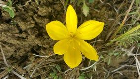 Härlig gul blomma på kullen Royaltyfri Fotografi